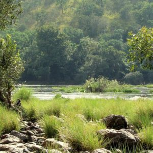 印度 Bhemeshwari 至 Muthathi森林 周末骑行