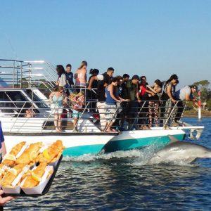 曼杜拉海豚岛游轮冒险,伯斯曼杜拉海豚,澳洲海豚游轮