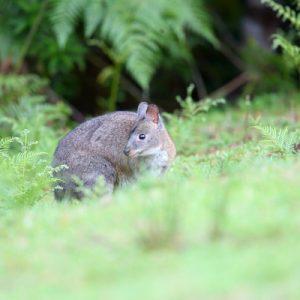 黄金海岸雷明顿国家公园奥莱利斯雨林一日游
