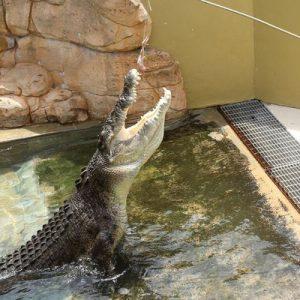 达尔文鳄鱼公园